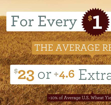 US Wheat Associates Infographics 285